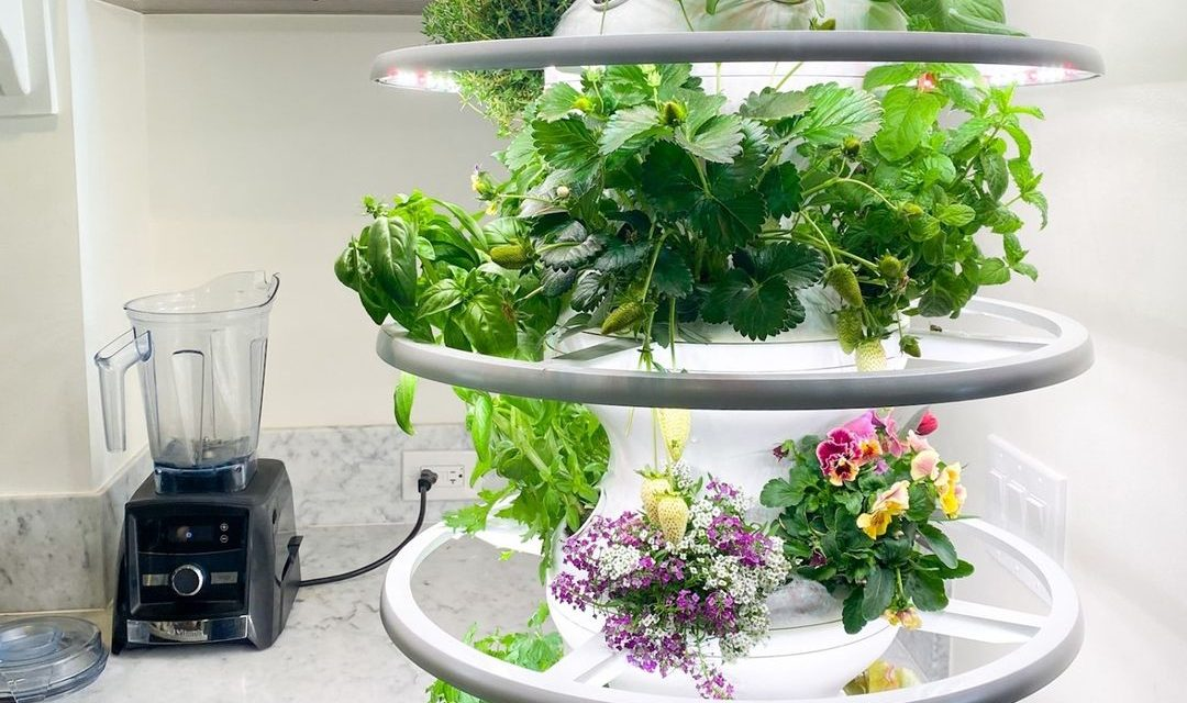 Lettuce Grow – Farmstand to Table