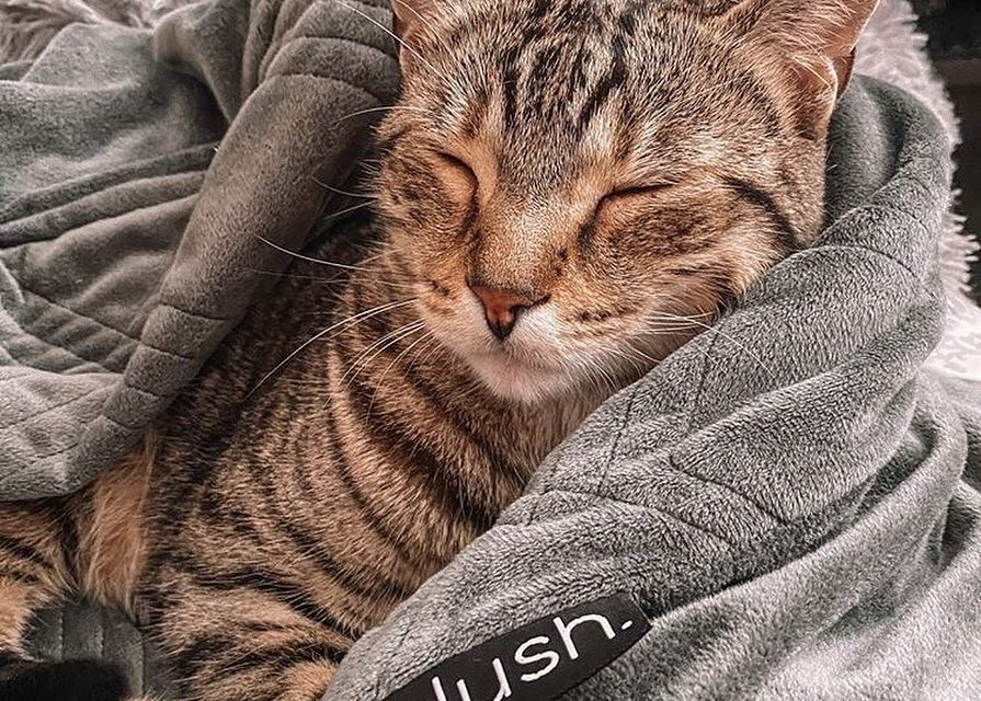 Hush Blankets – A Constant, Comforting Hug Whenever Needed