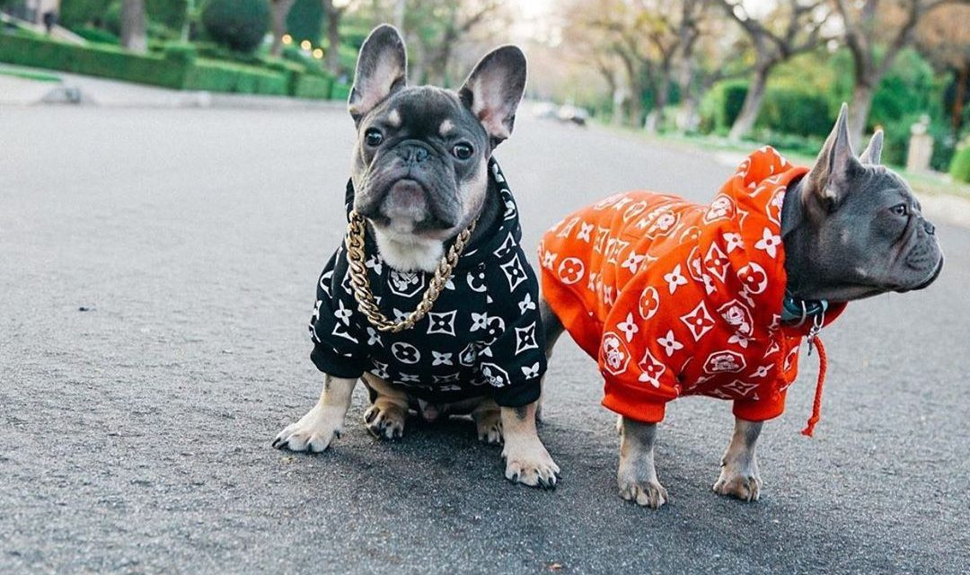 Fresh Pawz – Becoming the Official Streetwear Brand for Dogs