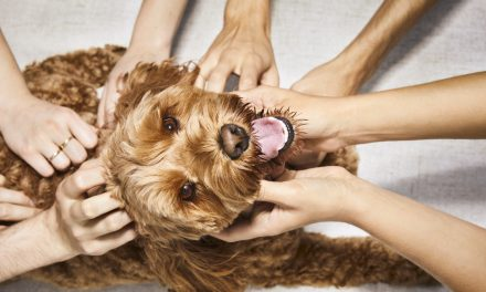 Dutch – Building the First Fully Digital TeleHealth Veterinary Brand